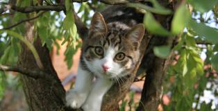 Katze-Baum