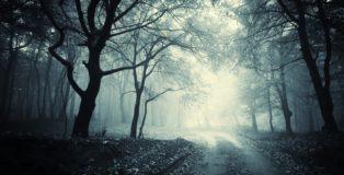fototapety-droga-przez-ciemny-las.png