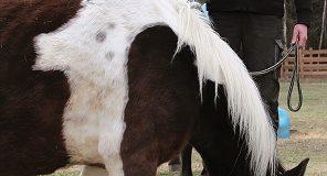 wywiad koń2