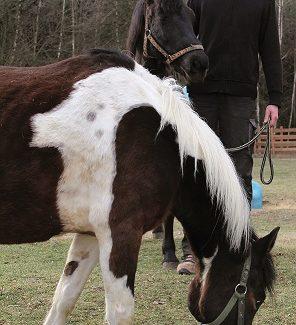 """Nie sztuką jest kochać konie, sztuką jest sprawić, by konie pokochały ciebie"""""""