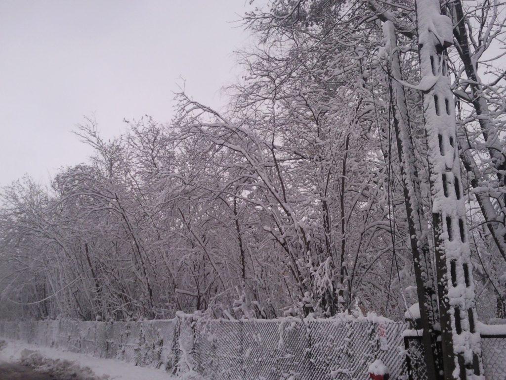 śnieżyca11