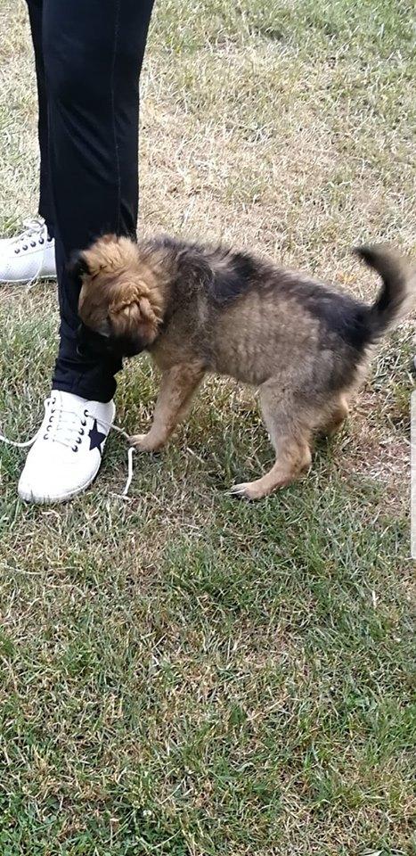 pies danuty kazimierczak