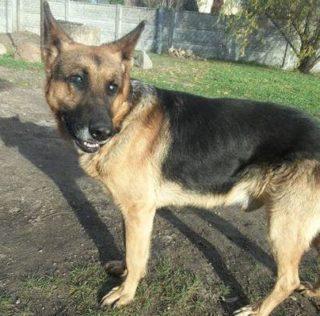 Pan Łukasz uratował psa, walczy o operację jego oczu!